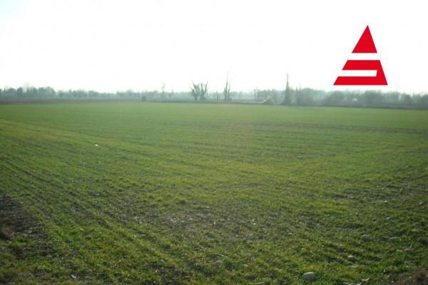 Terreno agricolo Tezze sul Brenta
